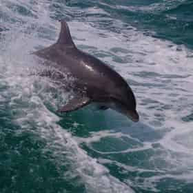 2 Hour Snorkel & Dolphin Experience with Wild Dolphin Tours