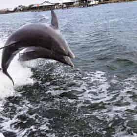 Destin X Waverunner Dolphin Tour - Departing From Destin Harbor