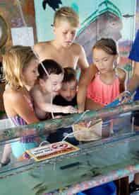 Shell Island Eco Sea-fari Tour & Dolphin Encounter