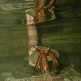 The Key West Aquarium Admission Ticket