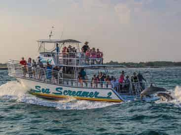 Sunset Dolphin Cruise Aboard the Original Sea Screamer