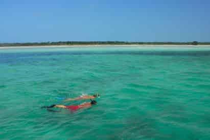 Morning Reef Snorkel Tour