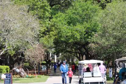 Whitney & Oak Alley Plantation Tour Transportation Included