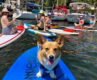 Sup Pup Fort Lauderdale Paddleboard Tour