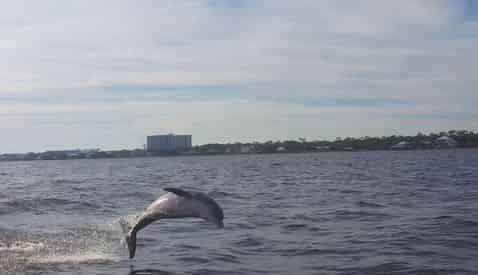Orange Beach Sunset Dolphin Cruise