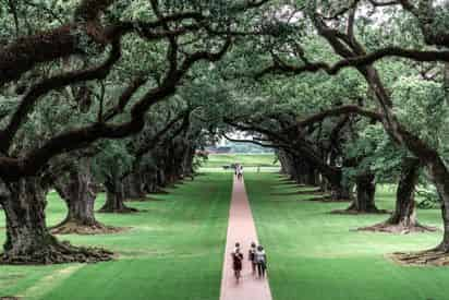 Oak Alley Plantation & Airboat Combo Tour with Transportation from New Orleans