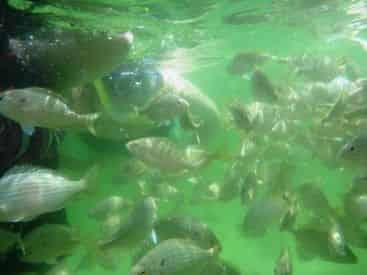 Destin Snorkel & Shelling Excursion