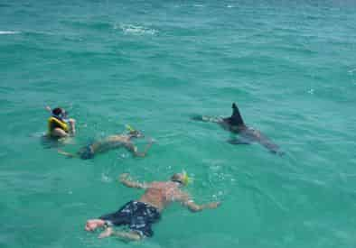 4 Hour Shell Island Dolphin Swim Experience