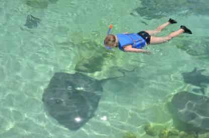 Stingray Bay Snorkel at Gulfarium Marine Adventure Park