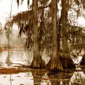 Destrehan Plantation & Swamp Boat Guided Tour with Transportation from The French Quarter