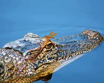 Manchac Swamp Tour with Optional Transportation from New Orleans