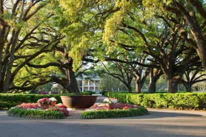 Oak Alley Plantation Guided Tour With Transportation From The French Quarter