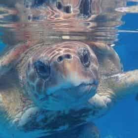 Discover Turtles Encounter at Gulfarium Marine Adventure Park