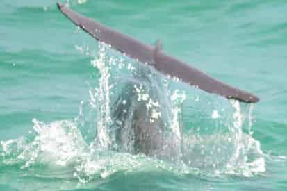 Snorkel and Dolphin Excursion on Destin's Original Sea Blaster