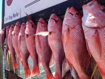 Private Offshore Fishing Trip - 35 Person Max