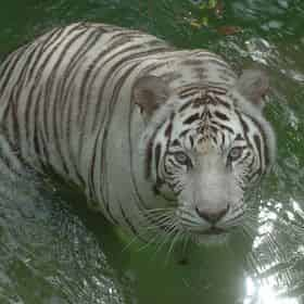 New Orleans Zoo and Aquarium Combo Deal