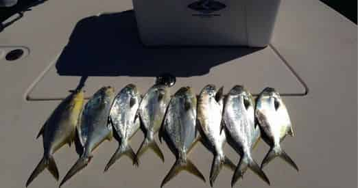 Rolling Tide Charters – Private Offshore & Inshore Fishing