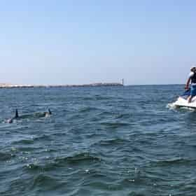 Xtreme H2o Destin Crab Island Jet Ski Dolphin Tour