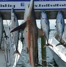 Private Shark Fishing Excursion Aboard the Big Deal