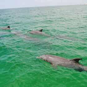 Shell Island Dolphin Tour on Waverunners