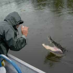 New Orleans City & Airboat Swamp Tour Combo by Louisiana Tour Company