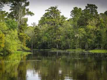 Guided Destrehan Plantation & Swamp Boat Combo with Transportation from New Orleans Hotels