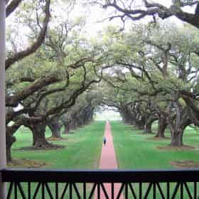 Oak Alley Plantation & Swamp Boat Combo from New Orleans Hotels
