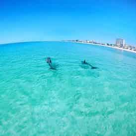 Waverunner Dolphin Tour Departing from Fort Walton Beach (Okaloosa Island)