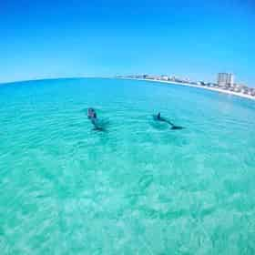 Waverunner Dolphin Tour Departing from Fort Walton Beach (Okaloosa Island)