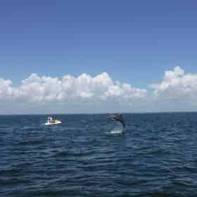 Pensacola Beach Jet Ski Dolphin Tour