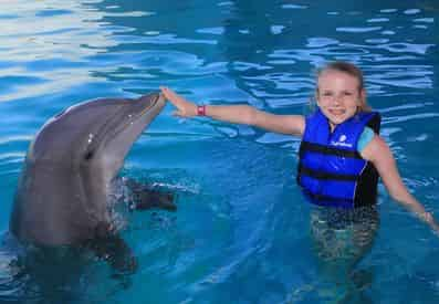 Dolphin Encounter at Gulf World Marine Park
